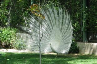der Vogelgarten