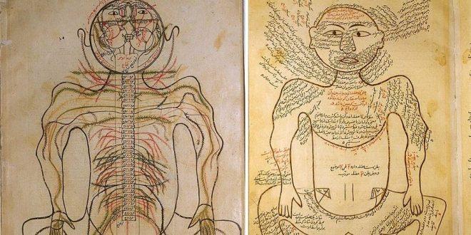 Anatomie des Mansour; eines der ersten farbig illustrierten ...